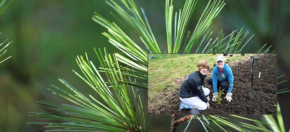 Tree planting: plant trees next spring