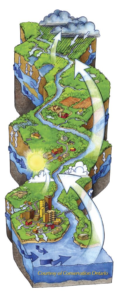 How water moves through a watershed